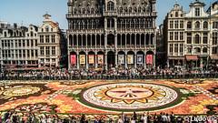 Bruxelles, août 2018 (Lцdо\/іс) Tags: bruxelles brussels flower carpet fleurs tapis roi maison architecture belgique belgium belgie citytrip 2018 guanajuato mexico mexique europe europa août august lцdоіс