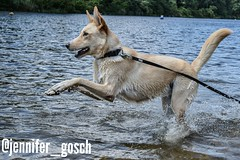 IMG_20180903_084445 (gosch_jennifer) Tags: dog dogs dogphotography swimmingwhitdogs mybestfriend happydog wander hiking hikingwhitdogs hund hunde hundefotografie schwimmenmithund wandern wanderlust wandernmithund vienna austria wien österreich panozzalacke
