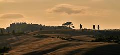 Tuscany - Crete Senesi - Sunrise (W_von_S) Tags: cretesenesi toscana tuscany toskana italien italy italia bellaitalia landschaft landscape panorama paysage paesaggio natur nature sunrise sonnenaufgang licht light shadows schatten trees bäume zypressen cypress felder fields ländlich rural landwirtschaft wolken clouds wvons werner sony sonyilce7rm2 outdoor siena hügel hills