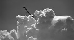 Off We Go Into The Wild Monochrome Yonder .... United States Air Force Thunderbirds In Silhouette .... Canadian International Air Show .... Toronto, Ontario (Greg's Southern Ontario (catching Up Slowly)) Tags: clouds canadianinternationalairshow torontoist silhouette unitedstatesairforcethunderbirds blackandwhitephotography monochrome offwegointothewildblueyonder