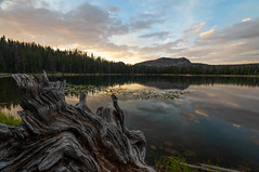 Teapot Lake (colincromar) Tags: uintas utah slc salt lake city landscape yellow golden hour sunset reflection polarizer sony 1635 zeiss a7 ilce7 water reflect clouds sky mountains rockies rocky ut wood trunk vista alpine woods forest wide ultrawide 16mm