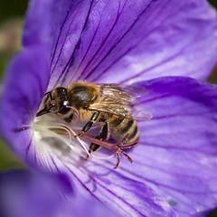 Pollination (Alexander Jones - Documentary Photography) Tags: documentary macro photography flower flora park botanical garden gardens london kew richmond south east england flowers bokeh nikon d5200