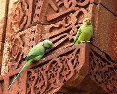Delhi Qutub Minar complex - two green parrots (juggadery) Tags: 2015 india delhi building architecture ornament decoration animal bird