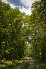 Rocheport Road (Notley Hawkins) Tags: httpwwwnotleyhawkinscom notleyhawkinsphotography notley notleyhawkins 10thavenue road dirtroad rocheportroad boonvillemissouri missouri coopercountymissouri trees foliage greenery tree canopy forest woods sky clouds 2018 september landscape outdoors wood