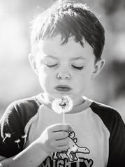 Make a Wish (HansenPrime) Tags: boy son dandelion blow blowing flower seeds child kid children blackandwhite bnw monochrome portrait portraits