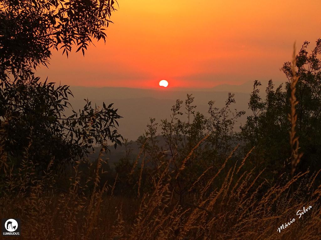 Águas Frias (Chaves) - ... Pôr do sol por entre a folhagem ...