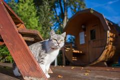 a bilecik jest? (PanMajster) Tags: gościniecnadsanem gościniec san cat kot sauna lesko bieszczady poland polska poranek morning pentax k3ii sigma 1835