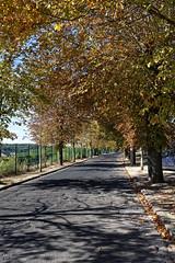 _DSC8769_DxO (Alexandre Dolique) Tags: d850 nikon etampes journées du patrimoine tour de guinette