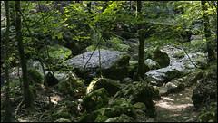 _SG_2018_08_6016_IMG_9518 (_SG_) Tags: switzerland magglingen twannbach ravine schweiz swiss wanderung hike hiking twannbachschlucht twann lake biel bieler see rock walls stein felsformationen water fluss geology river canyon fairytale lanes chasserals cure path