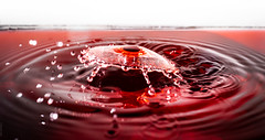 Vino (dlerps) Tags: daniellerps lerps sigma sony sonyalpha sonyalpha77 sonyalphaa77 closeup lerpsphotography liquid macro water waterdrop red sigma50mmf28exdg waves miopssplash miops collision foodcolouring