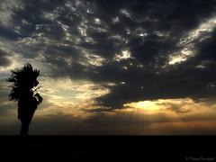 Le palmier et le dragon (bleumarie) Tags: été été2018 littoralméditerranéen mariebousquet mididelafrance suddelafrance vacancesàlamer vacancesdété bleumarie côte catalogne france littoral méditerranée méridional mer midi plage pyrénéesorientales roussillon saintemarie saintemarielamer sud vacances fabuleuse