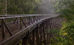 The high life (jenni 101) Tags: australia australianbush gippsland noojee timbertrestlebridge victoria landscape nikond7200 photographybyjen sigma1020mm