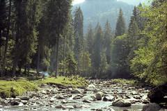 Upstream (Bas Tempelman) Tags: kodakportra160 nikonf801s kodak portra 160 nikon f801s aeschiried aeschi switzerland swiss schweiz zwitserland trees forest water bach