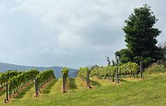 Virginia Wine Country (starbuck77) Tags: virginia wine winery vineyard nikon d7200