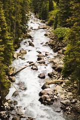Mountain Stream (wyojones) Tags: wyoming lakecreek flows lookingdownstream newlakecreekbridge beartoothhighway shoshonenationalforest northwestwyoming stream creek trees logs rocks rapids bridge view beartoothmountains