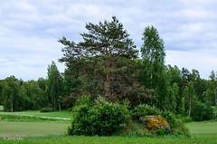Kiviraunio (nousku) Tags: mmp suomi finland sysmä tamron landscape