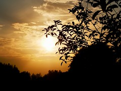 (docwiththecamera) Tags: cloud countryside september tree goldenhour sunset sun