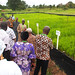 Rice Value Chain Compact of AfDB-funded TAAT initiative launched to help scale up proven rice technologies in Africa