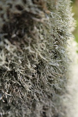 reference-177 (TLCStudentReferences) Tags: helenastackhouse leaves newzealand tree texture bokeh web lichen moss nz flowers