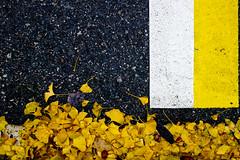 Colori d'autunno in città (mariateresa toledo) Tags: foglie leaves asfalto asphalt autunno autumn striscediparcheggio parkinglines sony sonydscrx100 mariateresatoledo dsc09683