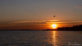 Sunset Herkingen Grevelingenmeer
