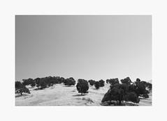 Knights Ferry | A Road Trip (bnishimoto) Tags: minimal roadtrip fujifilm acros bw monochrome xpro2 18135mm landscape sky