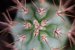 IMG_0204 Cactus (Fernando Sa Rapita) Tags: mallorca sarapita canon eos1300d sigma macro cactus