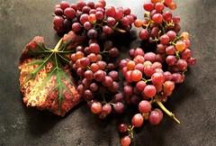 Grapes (vibeke2620) Tags: vanessa wineplant grapes vindruer vineplants