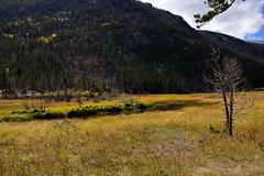 Hiking the Cub Lake Trail (MarkusR.) Tags: mrieder markusrieder nikon d7200 nikond7200 vacation urlaub fotoreise phototrip usa 2017 usa2017 colorado rockymountains rockymountainnationalpark landscape landschaft natur nature nationalpark hiking wandern hike trail wanderung cublaketrail