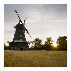 Aggarp - Fuji Reala 100 exp (magnus.joensson) Tags: sweden skåne summer sunset feild mill rolleiflex carl zeiss tessar 75mm 81a filter fuji reala 100 expired c41 6x6