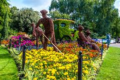 Tending the Flowers (Tony Shertila) Tags: colchester england unitedkingdom gbr 20170818104258essexhollidaycolchesterlr flower garden display gardener europe britain