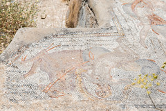 2018/07/09 13h10 mosaïque des Néréides (détail), Volubilis (Valéry Hugotte) Tags: 24105 maroc néréides volubilis canon canon5d canon5dmarkiv mosaïque mosaïquedesnéréides palmier ruines fèsmeknès ma