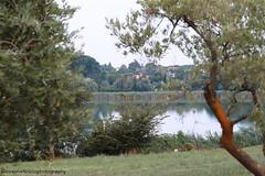 Passeggiando tra lago e campagna (Giovanna-la cuoca eclettica) Tags: campagna country natura lago estate stagioni summer