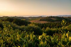 2018-08 CERRETO GUIDI, TUSCANY, ITALY (Marcaia) Tags: italy italia toscana tuscany cerretoguidi d7500 nikon nikond7500 sigma18200 empolesevaldelsa sunset landscape summer