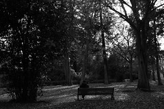 Sitting in the park (ianflagg) Tags: black bw blackandwhite blackwhite monochrome eos m people park tree rome italy europe
