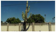 drive by 00747 (m.r. nelson) Tags: mesa arizona az america southwest usa mrnelson marknelson markinaz streetphotography urban urbanlandscape artphotography newtopographic documentaryphotography color coloristpotography