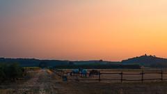 Colors and Gradients (Netsrak) Tags: sunset colors colours horse baum bäume tree trees landscape eifel landschaft fence zaun sonnenuntergang