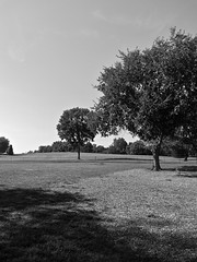 Near & Far (B&W) (neukomment) Tags: bw blackwhite parks michigan august 2018 summer dogs android