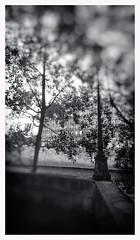 Quai doux aux amants (jeanfenechpictures) Tags: quais paris france iledefrance iledelacité ilesaintlouis dock seine river capitale quaideseine eau arbres batiments buildings quay urban landscape streetlamp réverbère monochrome noiretblanc jeanfenech