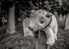 Lost......  (Explore #37) (+Pattycake+) Tags: toy animal bear forlorn lost graveyard atmosphere bw blackandwhite monochrome person walker