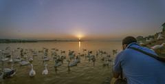 Good morning friends !!!!!!!!!!!!!!!!!! (Rambonp:loves all creatures of this universe.) Tags: sukhnalake chandigarh birds goose sunrise sun sunrays blue red yellow green water reflectiontrees sky clouds nature landscape wallpaper paradise silhouette mountains morning india atthecrack
