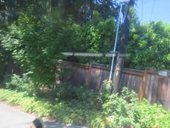 IMG_8319 (Andy E. Nystrom) Tags: bellevue washington wa bellevuewashington