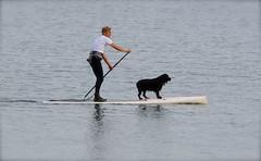 Sea Dog (Edinburgh Photography) Tags: man dog sea surfing documentary photojournalism water granton harbour nikon d7000