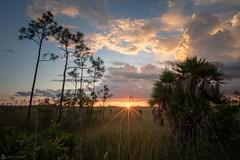Everglades on Fire (Daniel R. Wakefield) Tags: south florida everglades national park wetlands marsh swamp pines sunset sky sun sunburst clouds glow nature wilderness wildlife photography landscape herping nikon ngc natgeo nationalgeographic