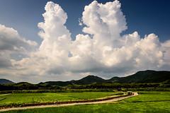 夏の情景 #4ーSummer scene #4 (kurumaebi) Tags: yamaguchi 秋穂 山口市 nikon d750 nature landscape 雲 cloud 入道雲 summer 夏 田んぼ 田 sky 空