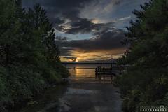 Bugs in the Sun (BobbyFerkovich) Tags: renton thebristolapartments gene coulon park lake washington clouds sunset sony sonya7riii bugs swarm