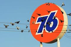 (Casey Lombardo) Tags: westminster westminsterca signs sign signage orangecounty orange 76 gasstationsign gasstation gasstations pigeons birds motion
