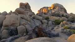 Do what you can, with what you have, where you are… (ferpectshotz) Tags: joshuatree nationalpark jumborocks california socal desert mojave rock sunset sky boulders trees plants shrubs desertplants rockformation sand outdoor southerncalifornia