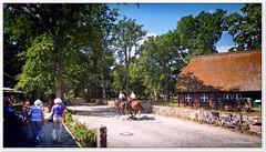 Berittene Polizei (Don111 Spangemacher) Tags: heidekreis himmel heide hochsommer sommer dorf pferde wege wilsede park niedersachsen naturschutzgebiet norddeutschland naturpark reisen romantik urlaub reetdach