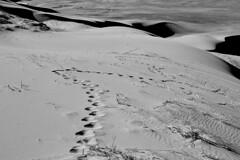 Omnogovi, Omnogovi (bm^) Tags: travel gobigurvansaikhannationalpark omnogovi mongolië duin dune dunes duinen sand zand sable step voetstap stap spoor sporen trace traces desert govi gobi woestijn planart1450 carlzeiss nikon d700 nikond700 zeiss planar5014zf mn ömnögovi ömnö khongoryn els duut mankhan khongorynels duutmankhan singing sands singingsands singingdune